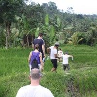 rice field trekking photo #20
