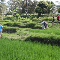 rice field trekking photo #22