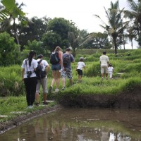 rice field trekking photo #23