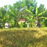 rice field trekking photo #27