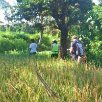 rice field trekking photo #28