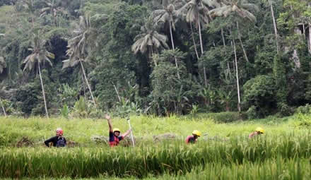 ayung river ubud rice fields