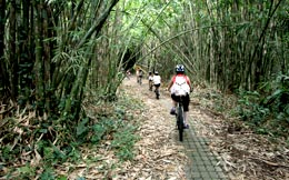 cycling routes bamboo forest