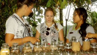 luwak coffee information