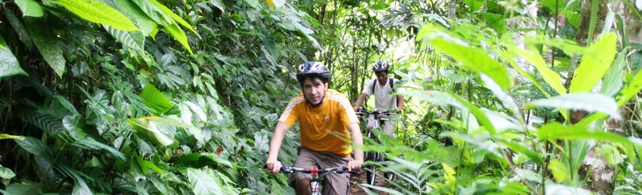 Cycling through green plantation