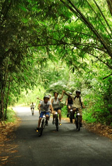 entering bamboo forest on bike