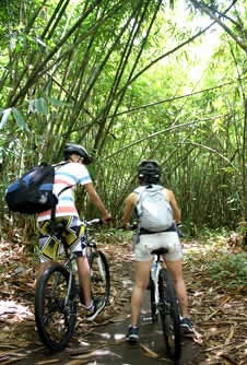 Cycling through bamboo forest