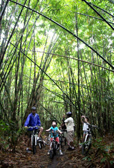 bali bike tour in the middle of bamboo forest
