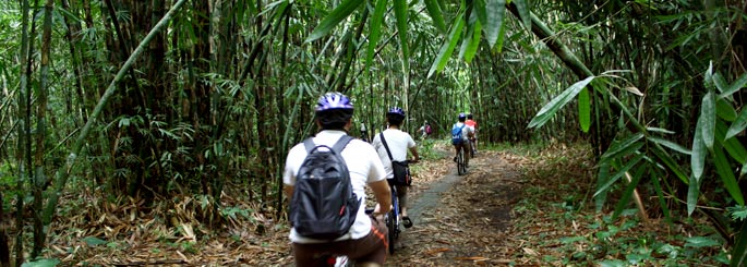 Bali bamboo forest bike riding