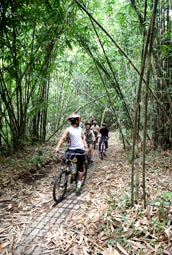 bamboo forest bike tracks