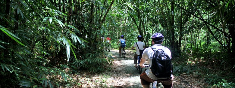 bamboo forest cycling track