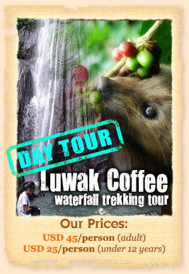 luwak coffee waterfall tour