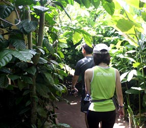 walk through coffee plantation